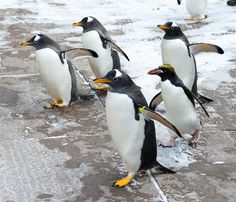 Did you make our Social Seen? Here, we highlight Penguins on Parade at the Pittsburgh Zoo & PPG Aquarium! Check it out: https://socialbutterflymagazine.smugmug.com/February-2014-Vol-2-Iss-2/Penguins-on-Parade/week's contest is a $50 Victoria's Secret GC! Winner announced 2/13! Good Luck! To win this prize: Follow us & like this post for entry and let your friends know, so they don't miss out. Follow and like us on all of our social media platforms for more chances! For contest rules, see…
