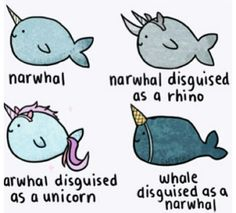 Why do I love narwals?