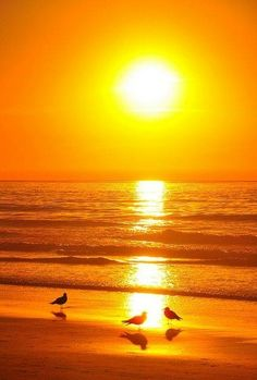 Gulls at Sunset - colorful - Sonne Amazing Sunsets, Amazing Nature, Amazing Places, Beautiful Places, Beautiful Sunrise, Beautiful World, Nature Photography, Beautiful Pictures, Scenery