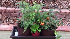 New Product Release Date 11/21/2014 Please Check Out Our Web Site http://www.growbaggardensystems.com/