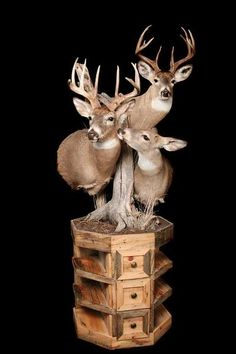 World Class Wildlife Studio and Taxidermy 3