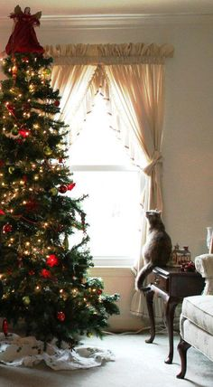 #cat #christmas - after dark, that baby is MINE!