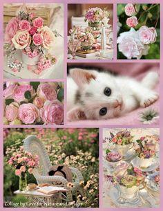 #roses and kitten <3