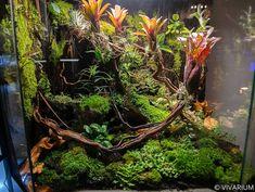 Lizard Terrarium, Terrarium Plants, Aquarium Fish Tank, Planted Aquarium, Reptile Enclosure, Reptile Cage, Tropical Terrariums, Gecko Vivarium, Reptile Habitat