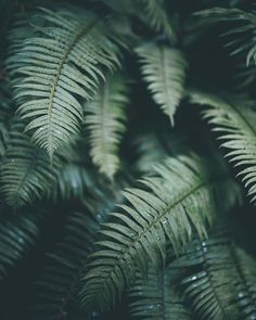 Ferns are my favorite