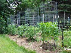 Green Zebra Market Garden: Make Your Own Sturdy Tomato Cages Hydroponic Gardening, Hydroponics, Organic Gardening, Aquaponics System, Aquaponics Fish, Garden Trellis, Garden Planters, Gardening For Beginners, Gardening Tips