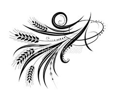Calligraphic Wheat Flourishes Vector Illustration Royalty Free Stock Vector Art Illustration