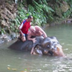 Swimming with Elephants in Bang Bao. The swimming part was great! The rest…