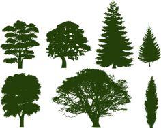 Oak tree tattoo ideas silhouettes clip art 36 New ideas Pine Tree Silhouette, Silhouette Clip Art, Free Silhouette, Silhouette Drawings, Kiefer Silhouette, Tree Outline, Oak Tree Tattoo, Tree Tattoos, Tattoo Bird