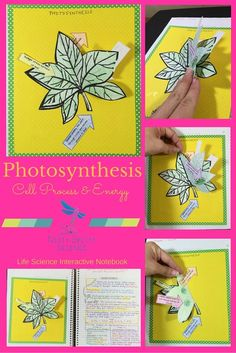 cell structure life science and interactive notebooks on pinterest. Black Bedroom Furniture Sets. Home Design Ideas