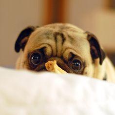If I had a dog and he looked at me like this, I could never say no. Look at those eyes?!!