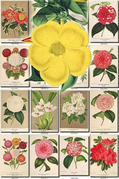 FLOWERS-112 Collection of 216 vintage images paper decoration beautiful florist botanical picture High resolution digital download printable           data-share-from=listing        >           <span class=etsy-icon