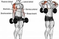 armpit rows - - Yahoo Image Search Results