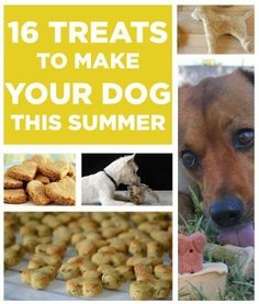 16 Treats To Make For Your Dog This Summer