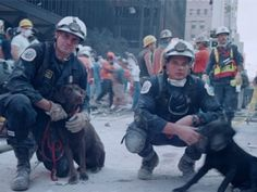 9/11 dogs