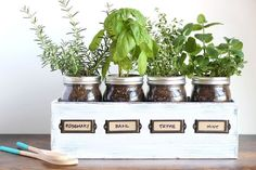 indoor gardening This herb garden in mason jars is a stylish alternative for people without yards, and it takes up very little room in your kitchen. Mason Jar Herbs, Pot Mason Diy, Mason Jar Herb Garden, Herb Garden In Kitchen, Diy Herb Garden, Kitchen Herbs, Mason Jar Crafts, Garden Planters, Herbs Garden