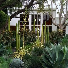 Trees, Cacti & Succulents - Exterior of the super-Cali styled Isabel Marant boutique in Los Angeles by The Sartorialist. Landscaping Tips, Front Yard Landscaping, Texas Landscaping, Landscape Design, Garden Design, Drought Tolerant Landscape, Dry Garden, California Garden, Xeriscaping