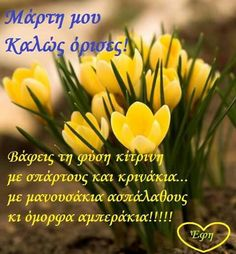 Happy Day, Wish, Beautiful Pictures, Quotes, Greek, March, Quotations, Greek Language, Qoutes
