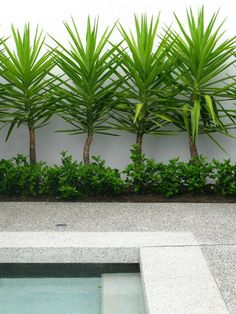 Image result for courtyard pool landscape zone 8