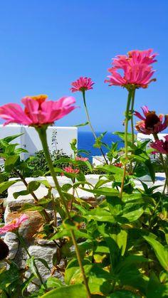 Naxos Greece Naxos Greece, Wallpapers, Plants, Art, Art Background, Kunst, Wallpaper, Plant, Performing Arts