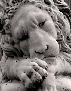 b4 lion