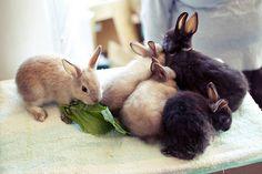 baby bunnies snacking