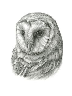 FRAMED Original Barn Owl Drawing by TheBriarArtShop on Etsy