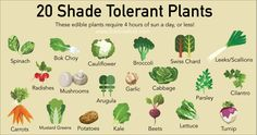 With a rise in people wanting to become more sustainable, finding places to grow things can be tricky. That's why you're going to be shocked to discover that there are over 20 shade tolerant plants that you can grow in areas of the garden that you normally thought couldn't be utilized. These edible shade tolerant