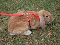 """Que eles são umas fofuras, ninguém duvida, mas você pode estar dizendo """"coelhos roem tudo e ainda cavam que é uma beleza. Eles só vão dar trabalho!"""". - Errado! Claro que, como qualquer outro animal..."""