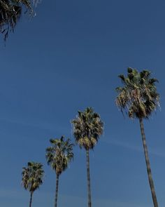 Deep Blue Sea, Bel Air, Seattle Skyline, Shades Of Blue, Palm Trees, Nature, Travel, Instagram, Inspiration