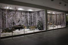 Музей природы откроется в Березинском заповеднике к Новому году   wildlife.by
