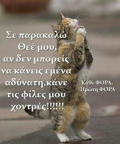 fat. Funny Animals, Cute Animals, Funny Greek Quotes, Clever Quotes, Funny Pins, True Words, Funny Photos, Funny Jokes, Lol