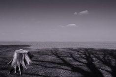 'Die Trauer der Bäume' von Michael Guntenhöner bei artflakes.com als Poster oder Kunstdruck $27.72