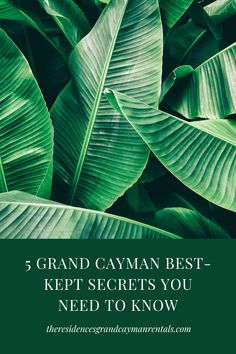 If you're looking for a unique experience, consider visiting some of Grand Cayman's best kept secrets. As locals, we know the best things to see and do! Scuba Diving Gear, Cave Diving, Cayman S, Grand Cayman, Cozumel, Cancun, Tulum, Best Kept Secret, The Secret