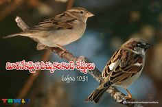 Matthew 10:31