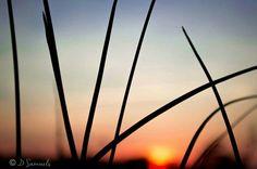 Carolina sunset. Jane Samuels Photography http://www.facebook.com/JaneSamuelsPhotography