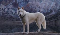 Wolves:  White Wolf.