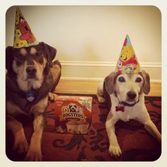 Happy 14th birthday Pucci!