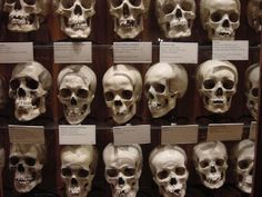 Mutter Museum Philadelphia - America's most famous museum of medical oddities, and home to the remains of Einstein's Brain