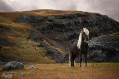 10 Aussagen, die jeder (Pferde-)Fotograf kennt - kennst du sie auch?? Ponyliebe – Pferdefotografie – Turnierfotografie in Bayern