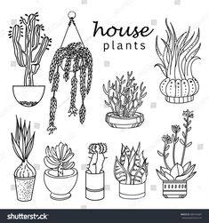 Illustration of houseplants indoor and office plants in pot.Set of house plant isolated. Vector linear sketch house plant pot illustration - Another! Plant Painting, Plant Drawing, Foliage Plants, Potted Plants, Indoor Office Plants, Plant Sketches, Illustrator, Plant Tattoo, Plant Wallpaper