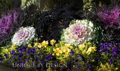 Red Bor & Peacock kale with ornamental cabbage and viola. Deep purplicious! l Unique by Design
