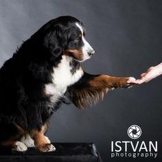 Dog #animal