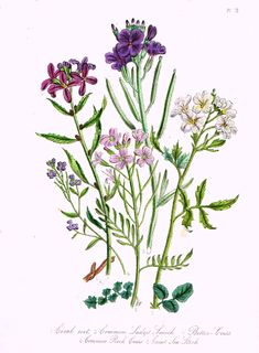 """Louden's Wild Flowers - """"CORAL ROOT & LADY'S SMOCK"""" - Hand Colored Lithograph - 1846"""