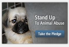 ASPCA  Fight Animal Cruelty