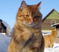 Коты восхитительны всегда. Автакие моменты— тем более.