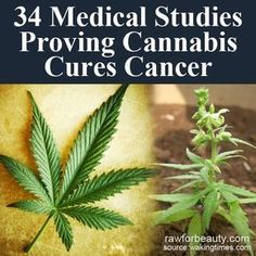 The Natural Health Page: 34 Medical Studies Proving Cannabis Cures Cancer