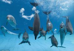 The gang's all here #dolphins http://www.vijaytamil.com/2012/10/watch-maattrraan-movie-online/