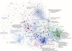 First comprehensive atlas of human gene activity released