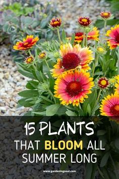 You have a wide selection of summer bloomers to choose from. Gardening 15 Plants That Bloom All Summer Long Garden Yard Ideas, Diy Garden, Summer Garden, Lawn And Garden, Summer Plants, Garden Trellis, Edible Garden, Outdoor Flowers, Outdoor Plants